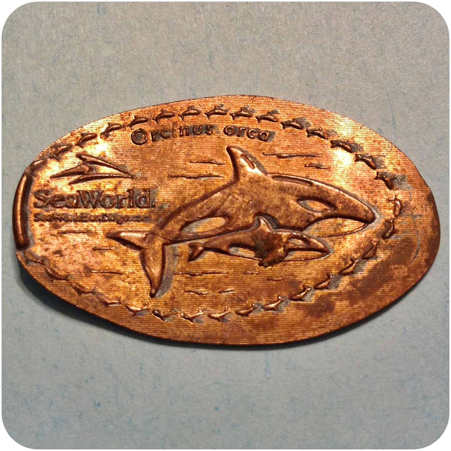 Killer Whales (Orcinus Orca), SeaWorld San Diego, CA, California Elongated Penny