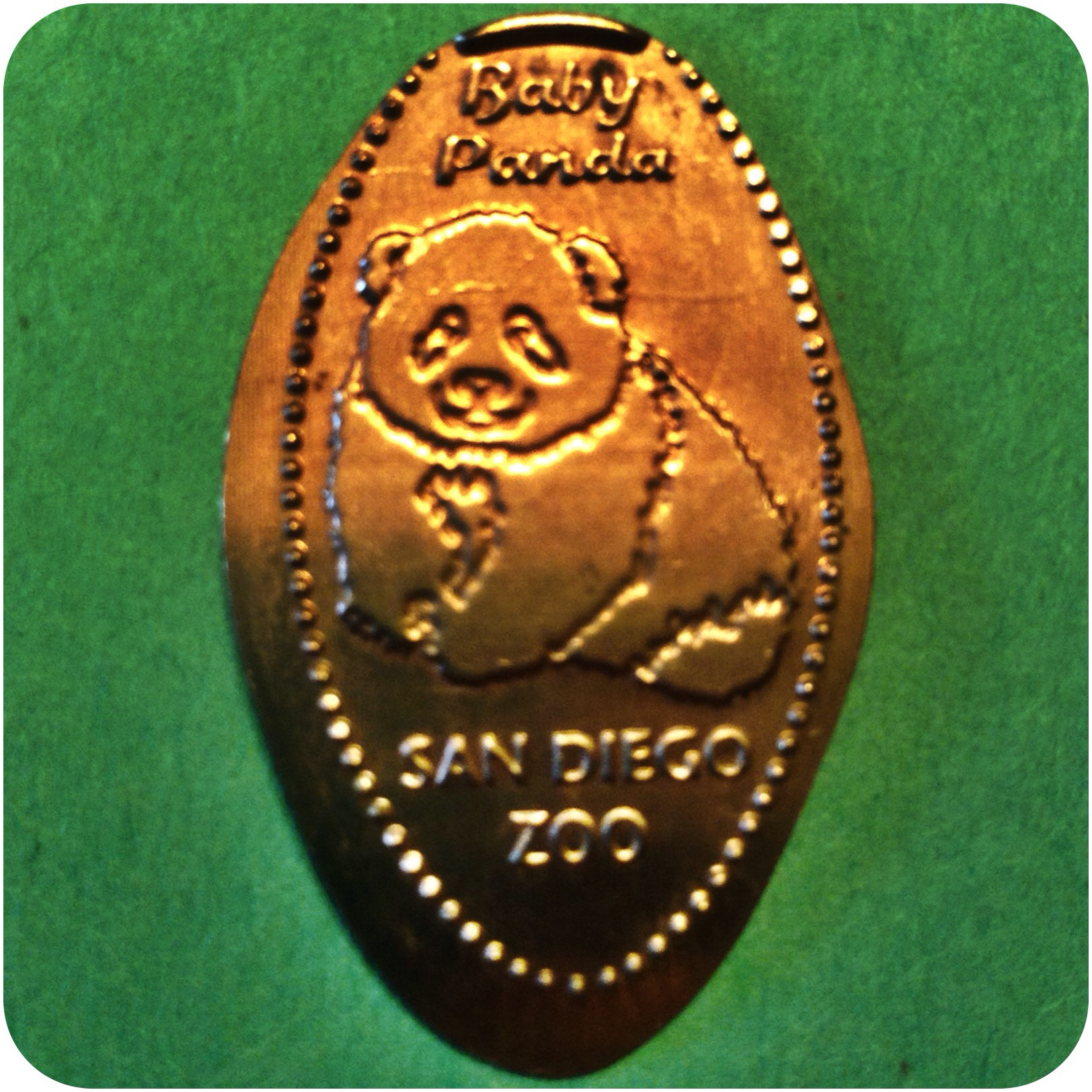 Baby Panda - Asian Passage, San Diego Zoo - Balboa Park, California Copper Penny